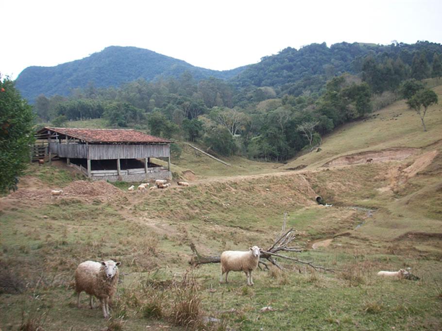 Fazenda de Jucemar Dall Ongaro, em Faxinal do Soturno/RS.